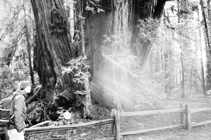 Redwood State Park, Californien